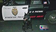 Intruso apuñaló a un perro de la policía
