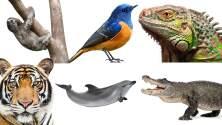 Conoce el nuevo movimiento para ayudar los animales en peligro de extinción