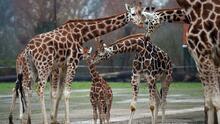 Zoológico de Sacramento considera reubicarse a Elk Grove: te explicamos las razones
