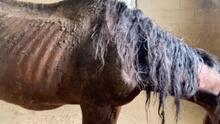 Abandonan a caballos sin comida al sureste de Houston