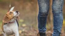 Aprenda a reconocer las señales de abuso a mascotas en esta época de calor