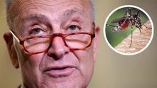 """Schumer dice que los mosquitos están """"fuera de control"""" en NYC, pide ayuda federal"""