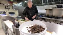 Millones de cigarras salen de su encierro en EEUU y este chef las caza para preparar suculentos tacos