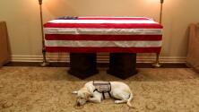El perro de servicio de George H. W. Bush acompañará los restos del expresidente durante los homenajes fúnebres