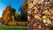 Otoño: la temporada que transforma el paisaje de Pensilvania