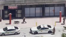 En video: Policía inspecciona el Hospital Jackson Memorial tras recibir una amenaza