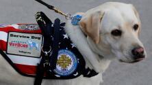 ¿Por qué la familia Bush no se quedará con Sully, el perro que acompañó al expresidente hasta el final?