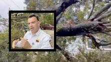 Advierten del riesgo de cortar arboles caídos por la posible presencia de cables con electricidad