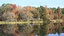 El parque Tyler te espera con manantiales y flores silvestres durante el otoño