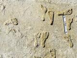 El hallazgo de huellas fósiles dan pistas sobre si los primeros humanos llegaron al continente americano antes de lo que se pensaba