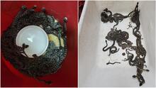 Mujer sospechaba que había una víbora debajo de su casa sin saber que eran 90 serpientes de cascabel