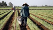 ¿Qué implicaciones trae un reciente fallo que favorece a empresas agrarias en California? Lo que debes saber