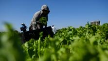 """""""Es tiempo de que les den esa legalización"""": piden al Congreso una vía a la ciudadanía para trabajadores agrícolas"""