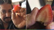El Feo cree tener en sus manos una 'aparición' de la Virgen de Guadalupe