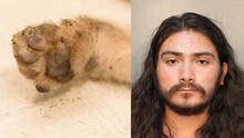Torturan a gatito hasta matarlo en Houston, detienen a un hombre como sospechoso
