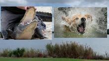 """""""Estaba en shock"""": mujer lucha contra un caimán en un lago para salvar a su perro"""