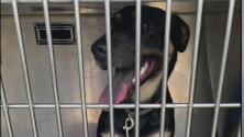 Rescatan a una perrita encerrada en un auto con el calor extremo y multan a su dueño de maltrato animal