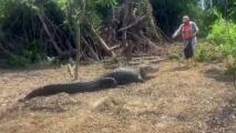"""""""Me tiemblan las rodillas"""": lo que siente este hombre cuando alimenta a un caimán como si fuera una mascota"""