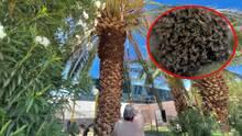 ¿Qué hacer en caso de encontrar un panal de abejas en mi casa? Esto es lo que recomiendan expertos