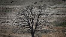 Suelos sobre explotados y la falta de lluvias tienen a California bajo un 95% de sequía