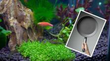 """""""Arowana frita"""": Mujer cocina el pez mascota de esposo para darle una lección"""