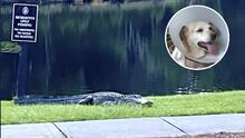 Hombre de Carolina del Sur lucha contra caimán para salvar a su perro