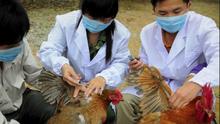 Primer contagio humano de un virus de la gripe aviar en China: ¿debemos preocuparnos?
