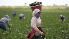 Celebramos el Día Nacional del Agricultor con un homenaje a todos los trabajadores del campo