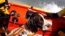 """""""Qué bien nadas tú"""": el emocionante rescate de un perro atrapado tras nadar más de tres millas en el mar"""