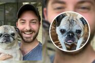 Nooble, el perro clarividente que se hizo viral por adivinar el futuro de sus seguidores