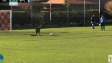 Un canguro se cuela en una cancha de fútbol y para varios penales