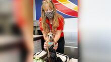 ¡Ah chihuahua!, perro se cuela en la maleta de pasajeros en vuelo de Texas a Las Vegas