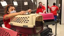 SPCA de Texas ofrece decenas de posiciones con beneficios
