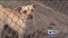 Decenas de mascotas huyen de sus hogares este 4 de julio