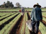 Alex Padilla dice que trabajadores del campo indocumentados merecen un camino a la ciudadanía