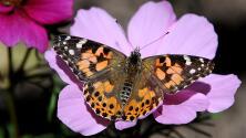 Una colorida mirada al Pabellón de las Mariposas del Museo de Historia Natural de LA