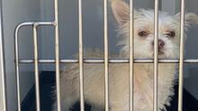 Centro de Cuidado de Animales de Bakersfield elimina tarifas de adopción temporalmente