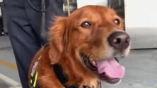 Héroe de cuatro patas: Blaze, el perrito que apoyó en las labores de rescate en el colapso del edificio en Surfside
