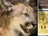 Madre rescata a su hijo de 5 años de las fauces de un león de montaña en Los Ángeles