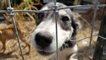 Rescatan a 16 perros que vivían en condiciones deplorables en el condado Fort Bend