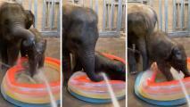 Así disfrutan la hora del baño los elefantes del Zoológico de Houston