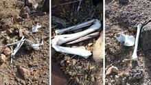 Hallan restos humanos en el desierto de Arizona que podrían ser de inmigrantes
