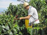 Bringing A Taste of Colombia to New York City: Q&A with the Founder of Cano Coffee