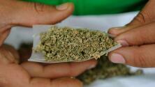 California aprueba la propuesta número 64, que permite el uso de la marihuana con fines recreativos