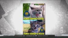Tras la derrota ante el América, Pumas fue la victima de los memes de la semana