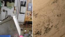¿Tienes moho en tu casa tras las recientes inundaciones? Un experto explica cómo se puede afectar tu salud