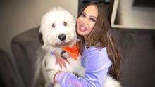 El estrafalario regalo que Chiquis le dio a su perro por su primer cumpleaños
