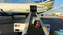 Servicio de animales de Miami-Dade envía 54 perros a Canadá, donde les hallaron un hogar