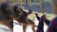 Fallece orangután de 15 años en el zoológico de Phoenix