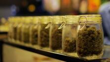 Preocupación por el aumento de niños que terminan en urgencias por comer accidentalmente marihuana medicinal